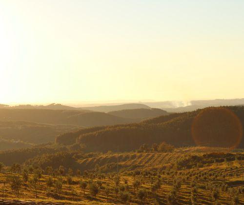 Fazenda Serra dos Tapes